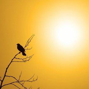 JacquieR.bird